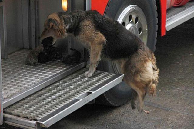 собака не переносит одиночество что делать подарить год Обезьяны