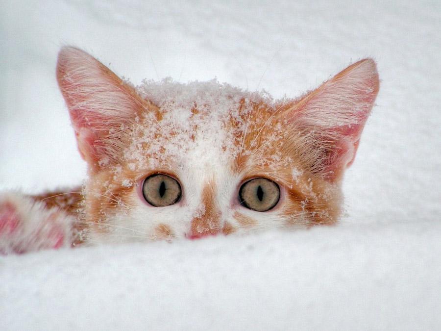 zima_sneg_kot