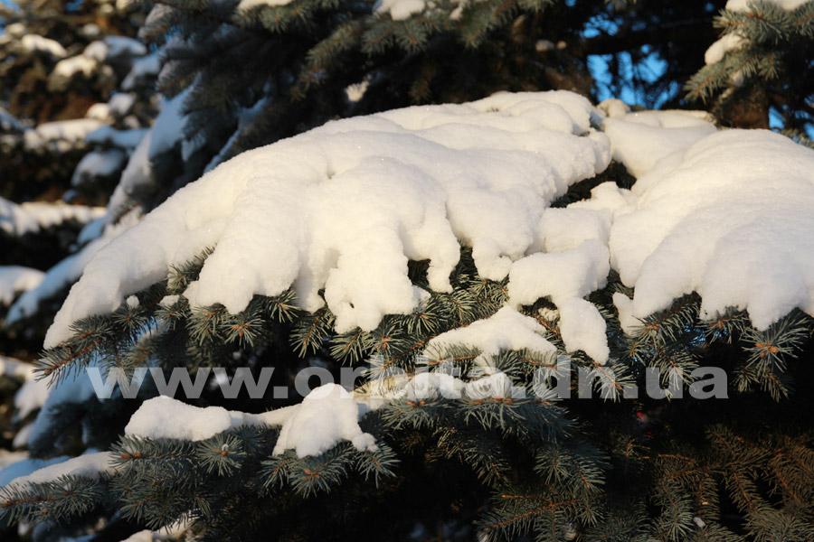 zima_sneg