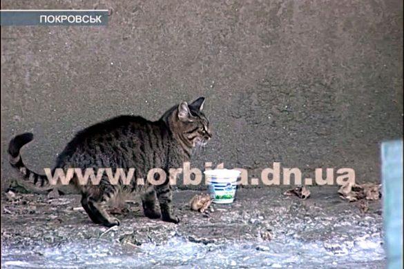 Бродячие коты поссорили жителей м-на «Солнечный»