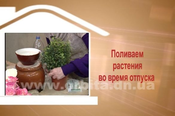 Дом советов 30.01.2017