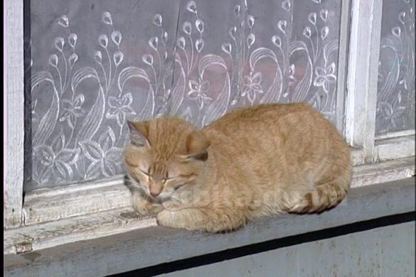 В Родинском кошка, больная бешенством, покусала женщину