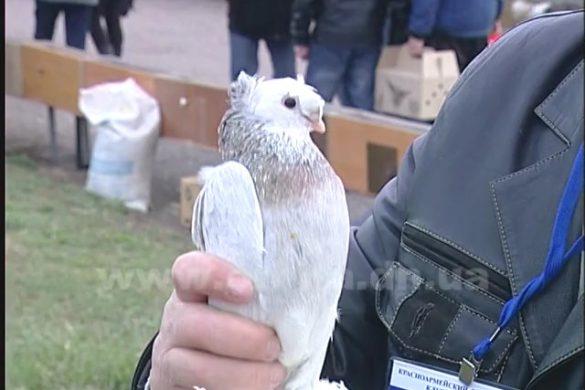 Интересные факты о голубях с Межрегиональной выставки в Покровске