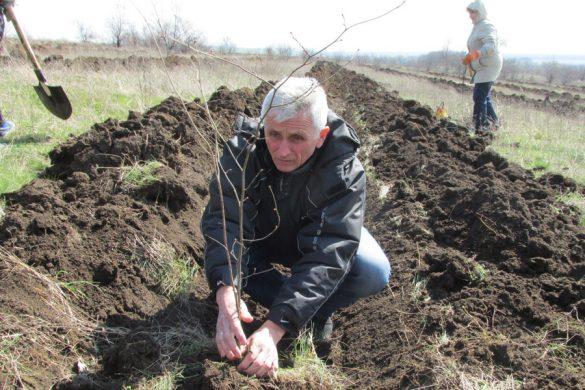Как лещина пополнит бюджет поселка Шевченко?