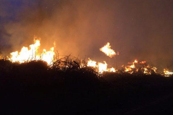 Пожар в Покровске: рационально использовать спиленные ветки не удалось