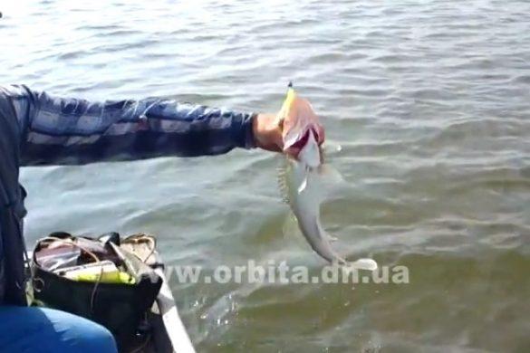 Рыбалка под угрозой! Как спасти то, что еще осталось?