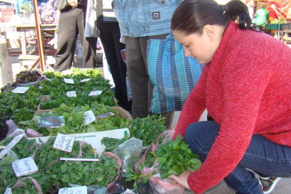 Весна возвращается – пора высаживать рассаду